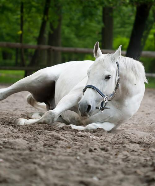 Pferde, wohlfühlen